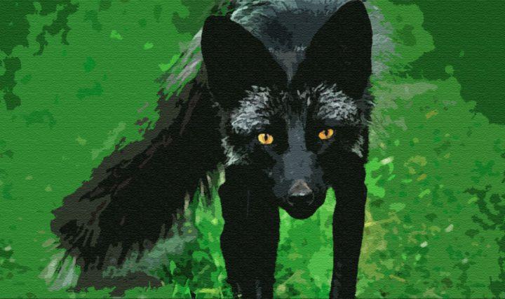 Черная лисица