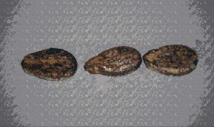 Три арбузных семечка