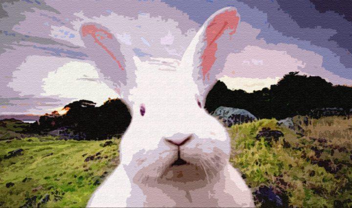 Почему у зайца три губы