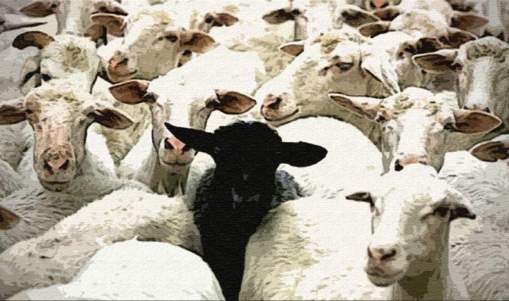 Сколько у Пэкалэ было овец?
