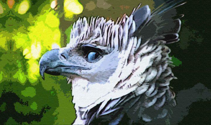 Птица Кахка