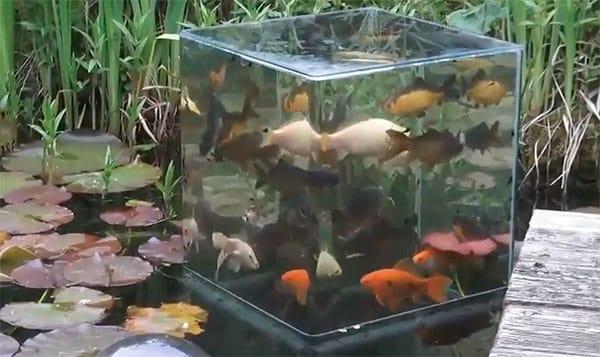Надпрудный аквариум