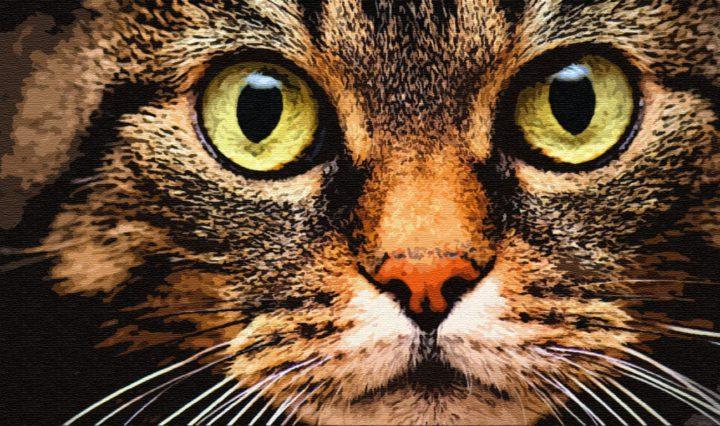 Храбрый кот