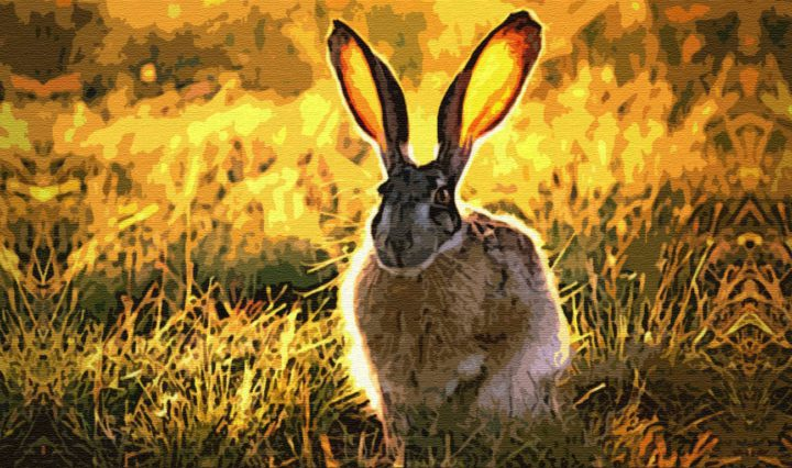 Заяц и его мать