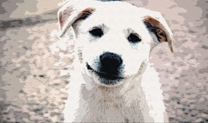 Как собака нашла себе хозяина