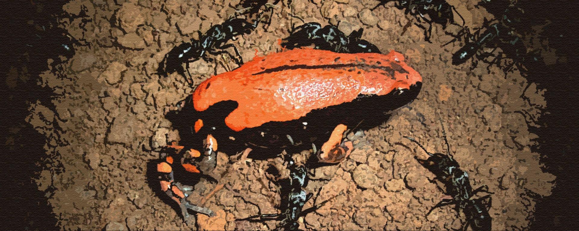 Лягушка и муравьи