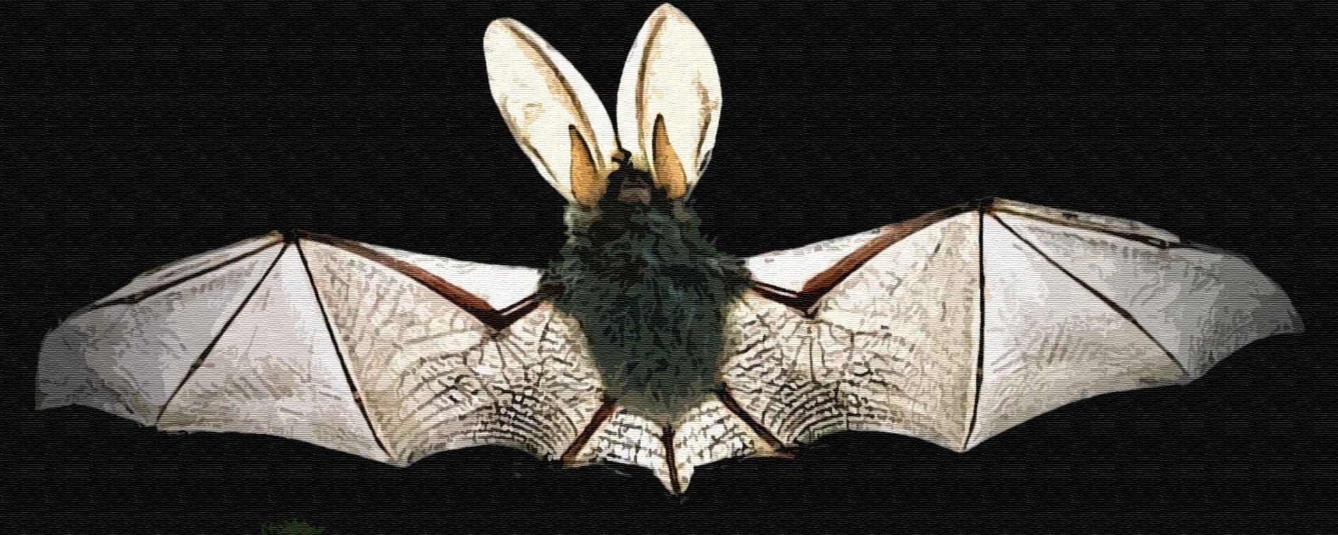 Почему летучая мышь летает только ночью
