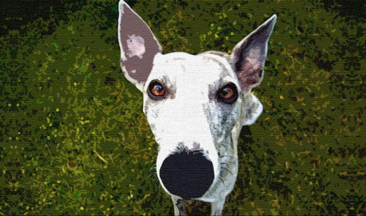 Как собака нашла себе хозяина-друга
