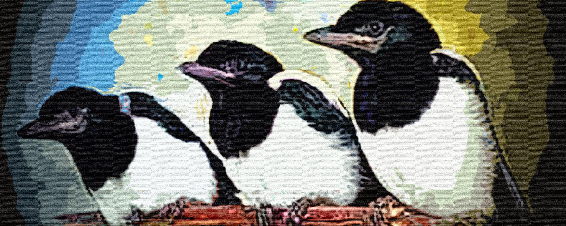 Сорока и ее птенцы