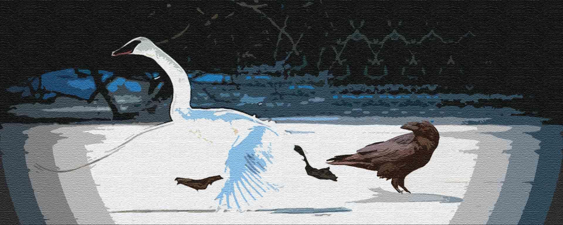 Ворон и лебедь