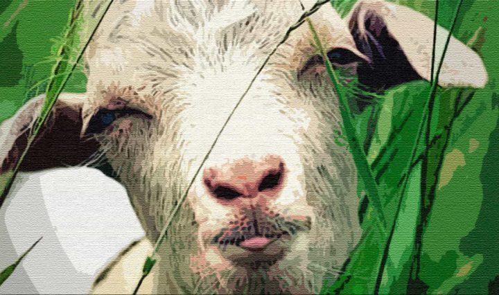 Коза — острые рога