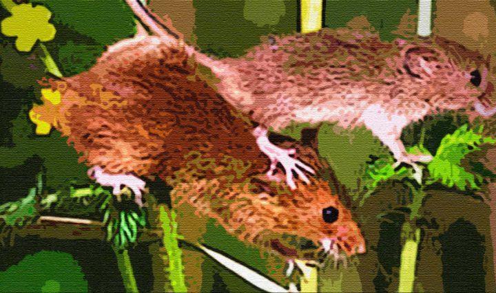 Мышка пришла к мышке