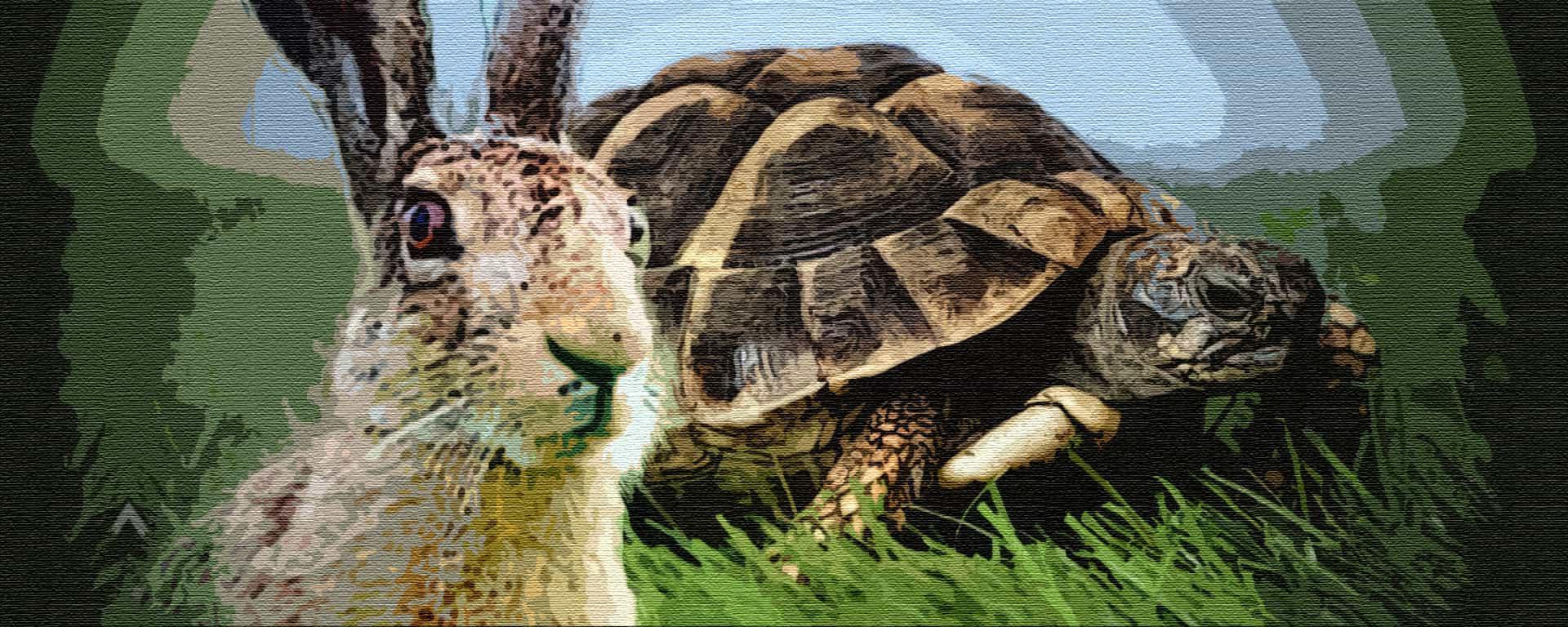 Qvator   Заяц и черепаха